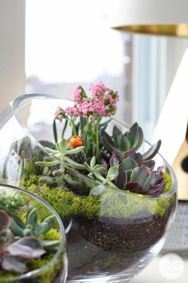 terrarium selber bauen glas gefäße rund mit öffnung