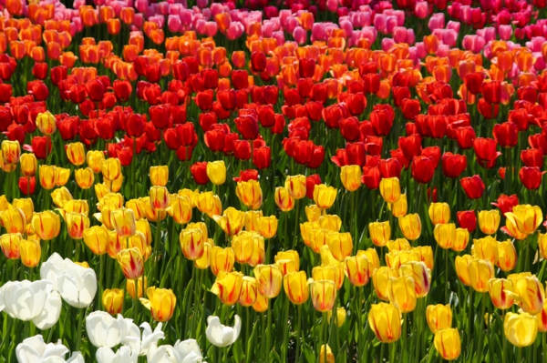 urlaubsziele europa berlin tulipan britzer garten