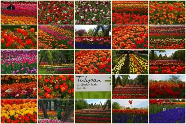 urlaubsziele europa berlin tulipan