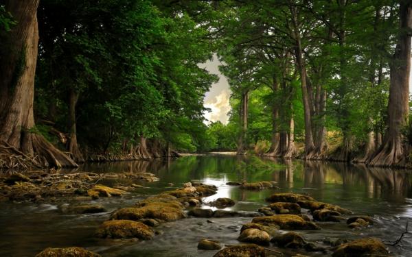 wald bäume fluss natur genießen sich entspannen