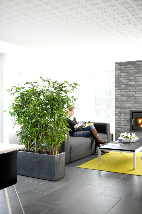 zimmerpflanzen drachenbaum Dracaena surculosa stilvolles pflanzgefäß