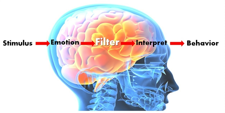 Emotionale Intelligenz wie funktioniert das gehirn