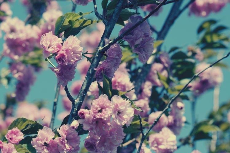Gartenaccessoires und Gartendekoration Frühlingsblumen