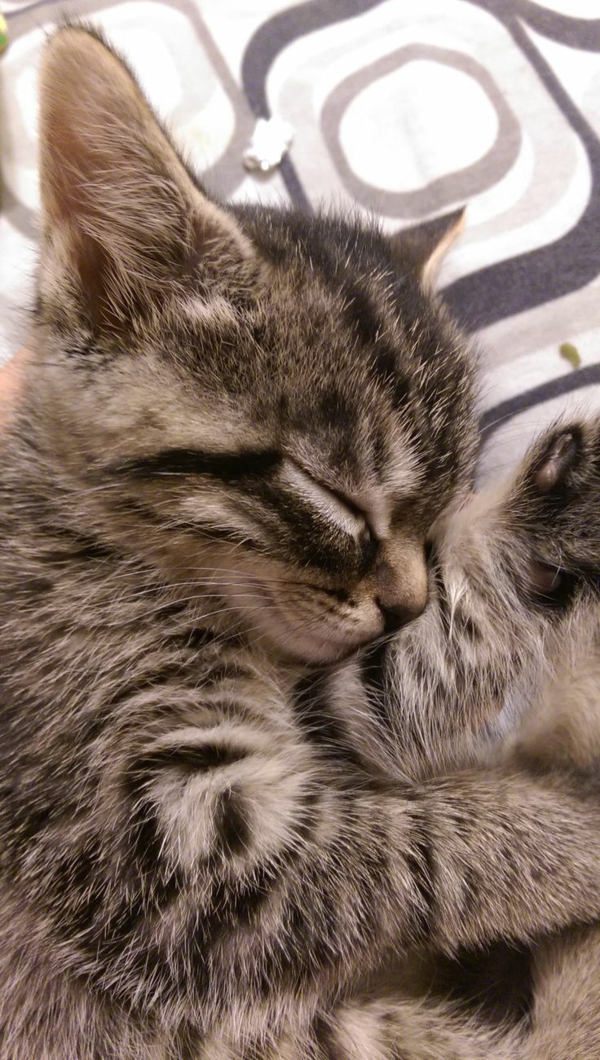 Katze Haustier baby katze niedlich