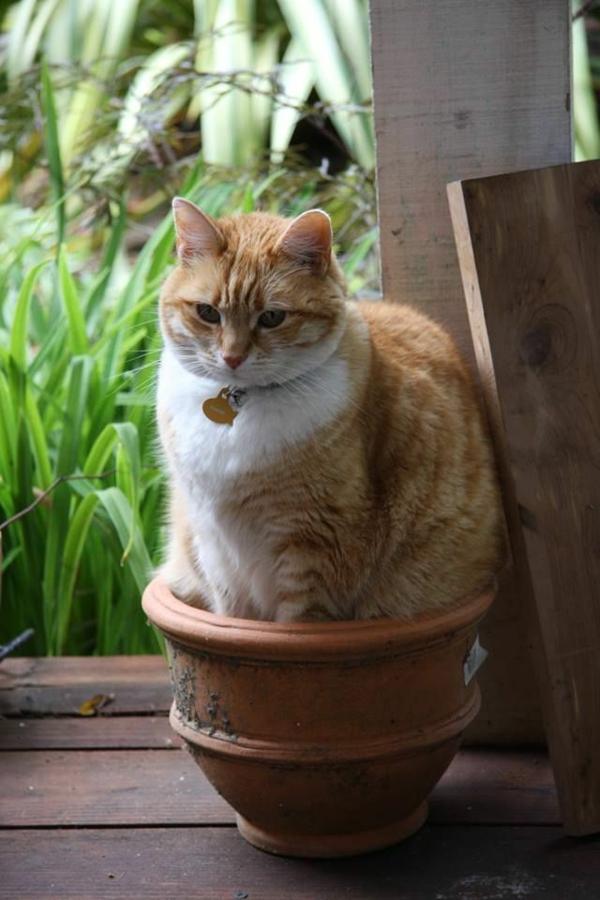 Katze Haustier hauskatze haben katze im blumentopf