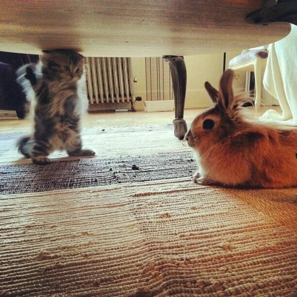 Katze Haustier katzen und anderen haustiere kaninchen
