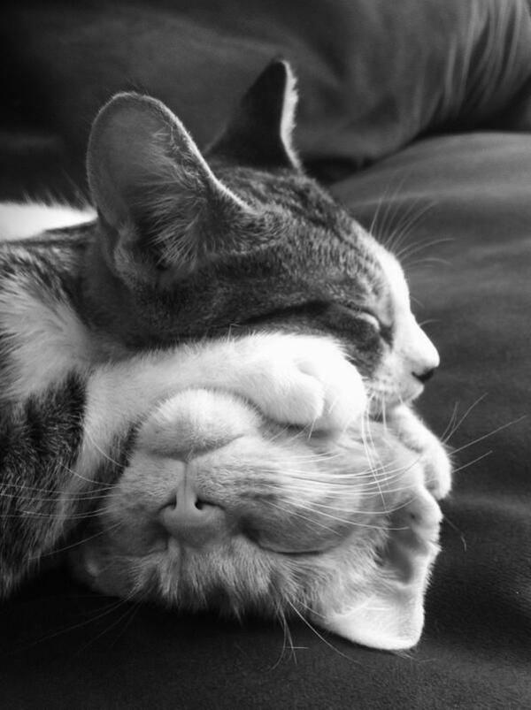 Katze Haustier schlafende katzen am sofa