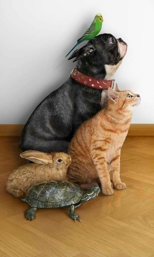 Katze Haustier und freunde ausgefallene haustiere