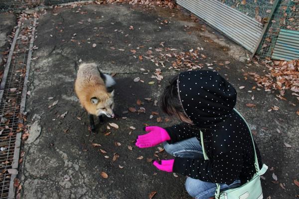 ausgefallene haustiere fuchs als haustier fox village japan