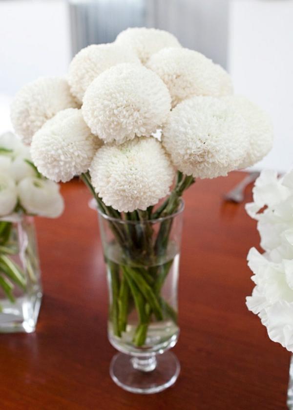 chrysanthemen blume weiß ausgefallene blüte