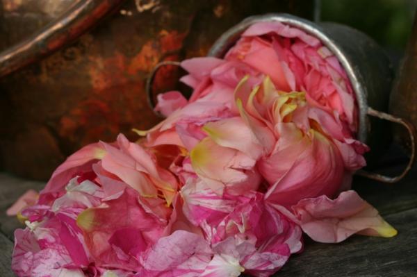 damaszener rose wertvoll rosenöl kosmetik
