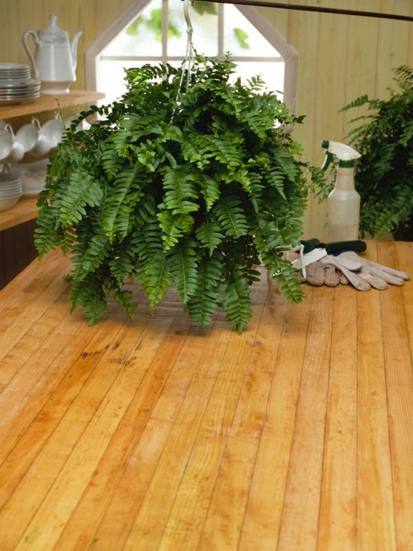 dekoideen farne zimmerpflanze pflege holzboden