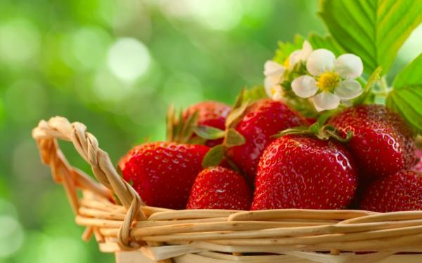erdbeeren gesund früchte frisch korb