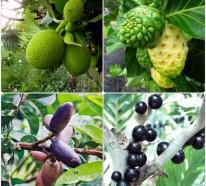 Exotische Baume Im Uberblick Kennen Sie Diese Exotischen Fruchte
