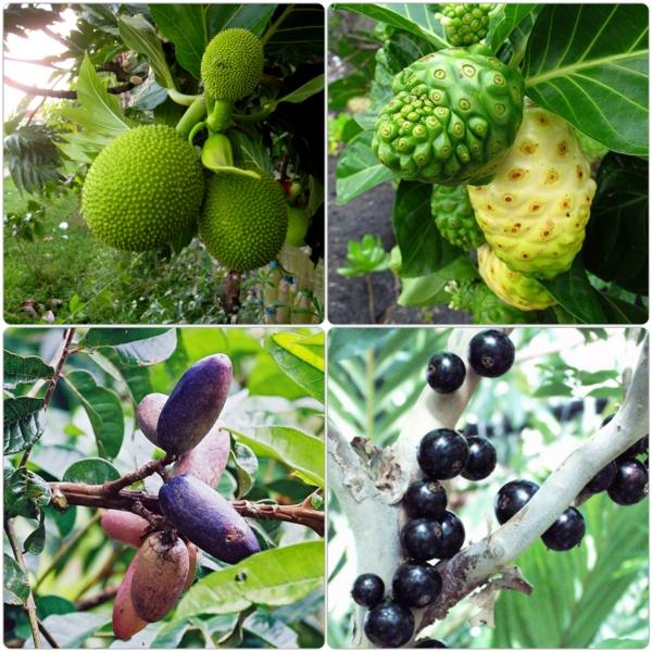 exotische bäume exotisch früchte liste verschiedene arten
