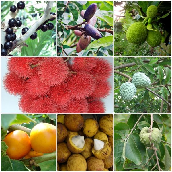 exotische bäume exotische früchte liste