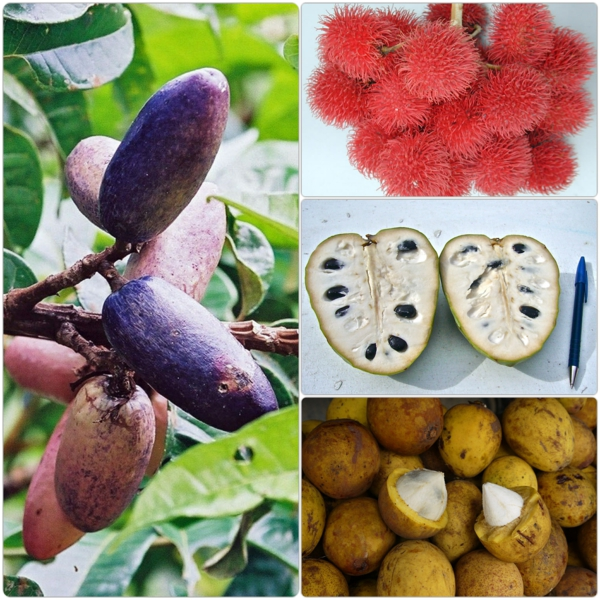 exotische früchte liste exotische bäume