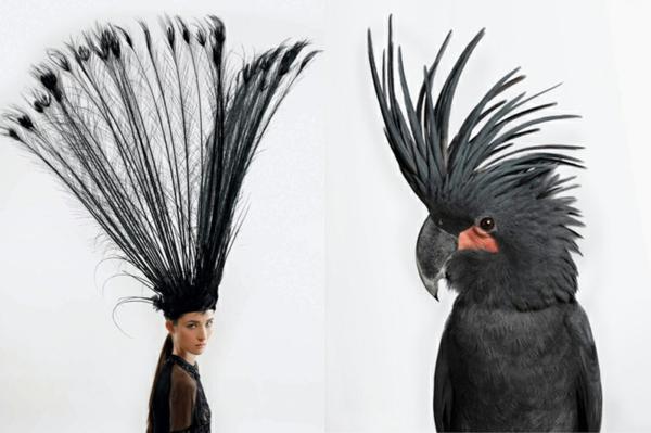 kunst fotografie papagei mode kopfschmuck