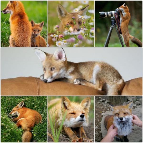Fuchs Als Haustier Zahlt Der Fuchs Zu Den Ausgefallenen Haustieren