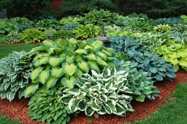 Garten pflanzen  Funkien Pflanzen – toll für den Garten und für die Küche