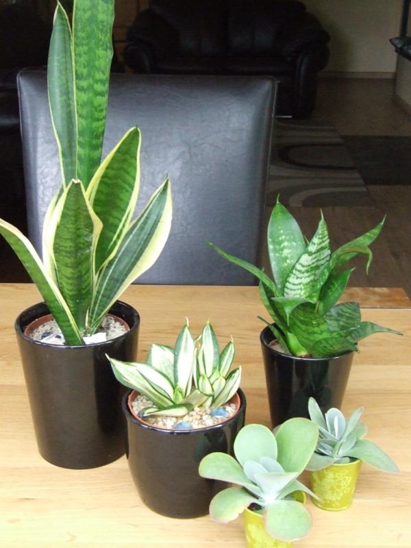 gartenpflanzen zimmerpflanzen schöne dekoideen