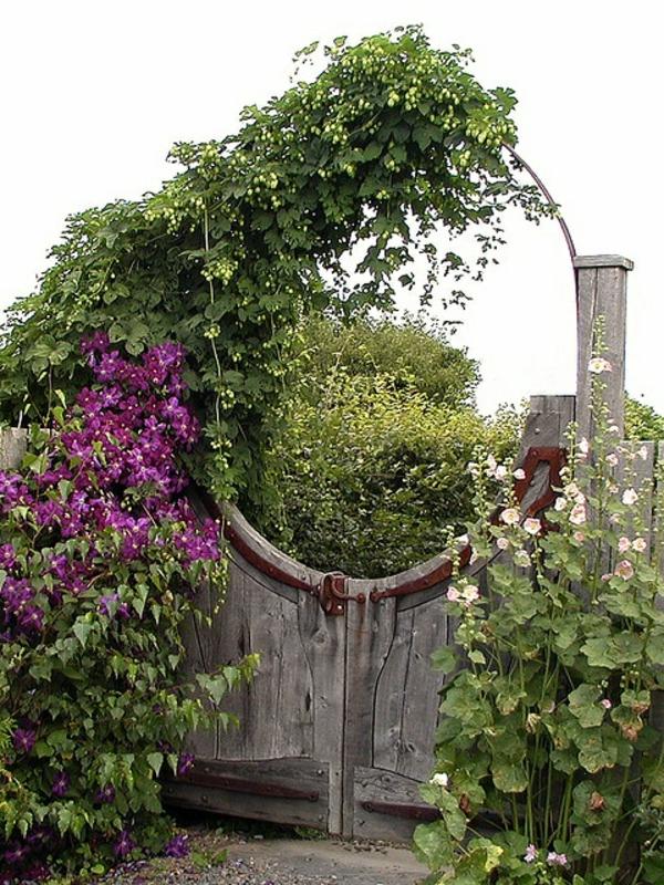 gartentür design rustikal pflanzen garten gestalten
