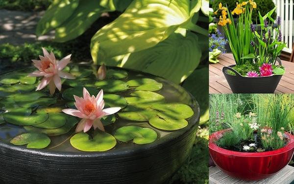 gartenteich bauen mini zarte blüten lotus