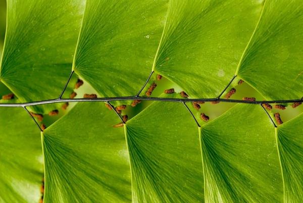 geometrische formen ginkgobaum blätter