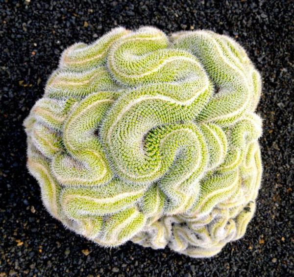 geometrische formen kaktus