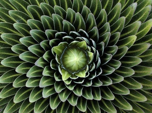 natur formen lobelia