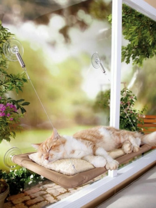 hauskatze verwöhnen katzen möbel bett am fenster