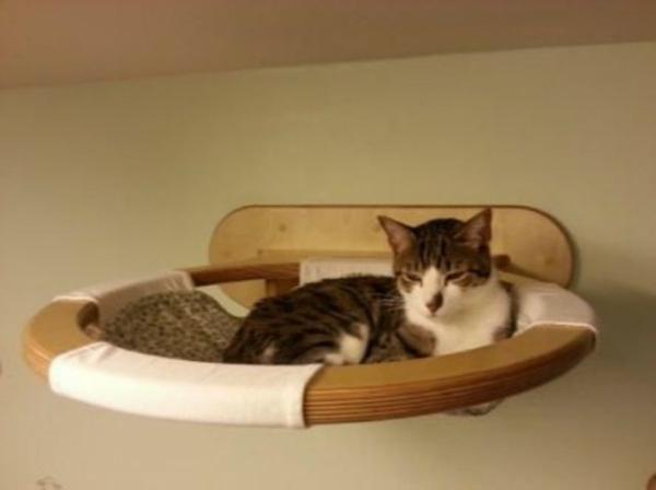 hauskatze verwöhnen katzen möbel bett bauen wand