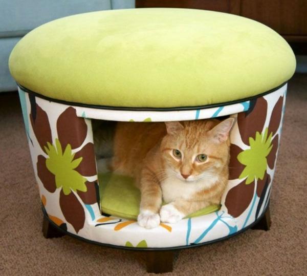 hauskatze verwöhnen katzen möbel bett hocker auf rollen
