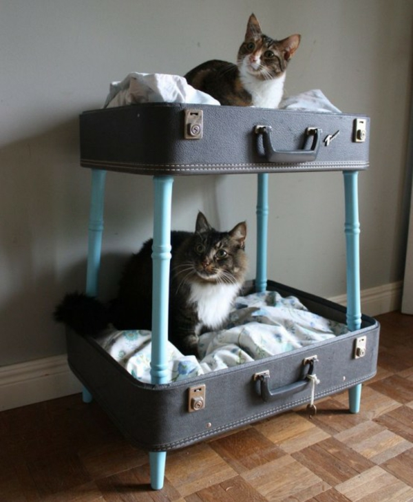 hauskatzen verwöhnen katzen möbel bett selber bauen koffer beine