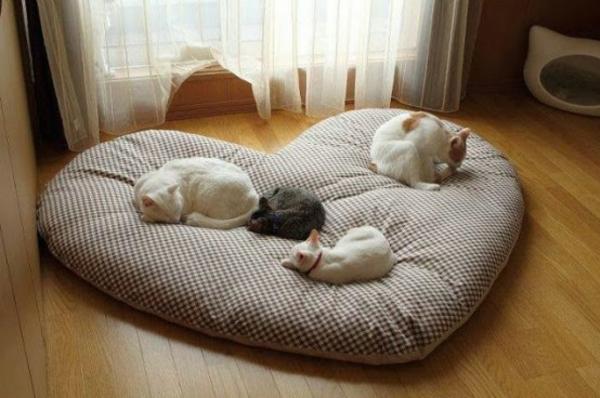 verw hnen sie ihre hauskatze mit einem kuschelweichen katzen bett. Black Bedroom Furniture Sets. Home Design Ideas