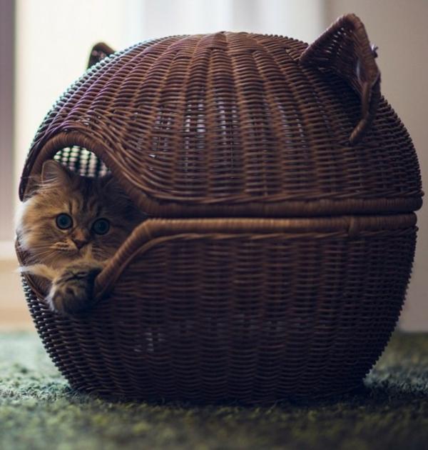 haus katzen verwöhnen katzen möbel bett korb rattan