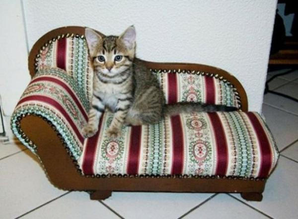 haus katzen verwöhnen katzen möbel bett schickes sofa