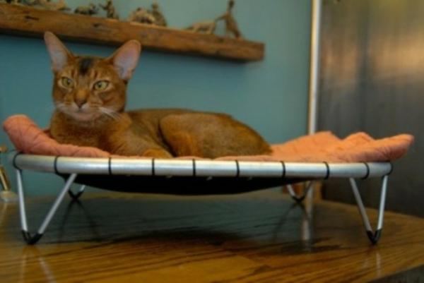haus katzen verwöhnen katzen möbel bett trampoline