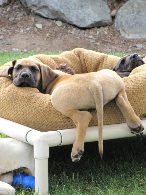 hundebett selber bauen außenmöbel für haustiere