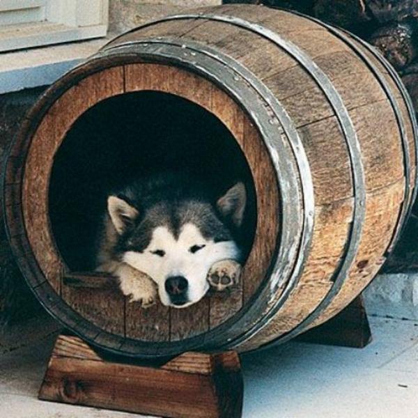 hunde bett selber bauen holzfass alt