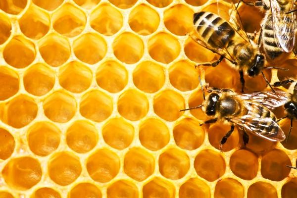 ist honig gesund honigwabe bienen