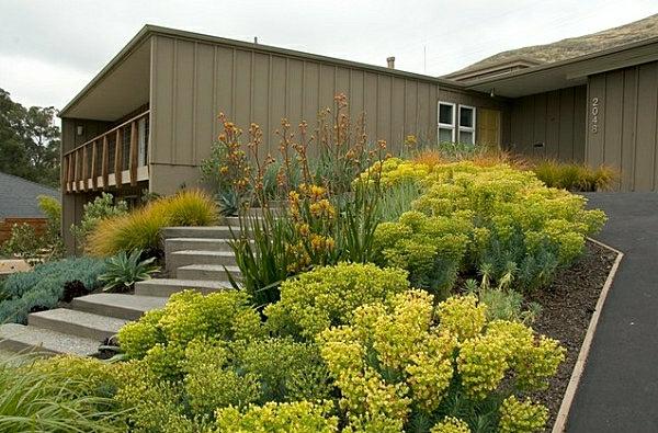 kleinen vorgarten gestalten ideen gelbe pflanzen vorgartengestaltung