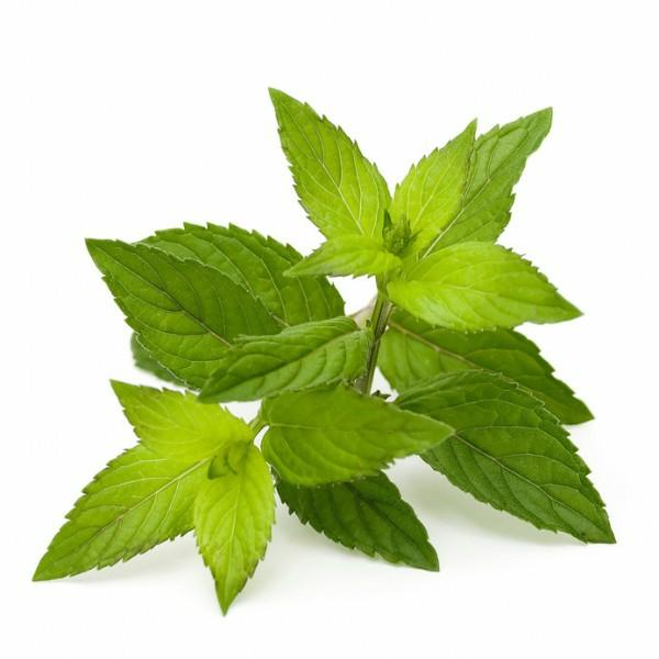 kuchen ohne stevia pflanze grün frisch
