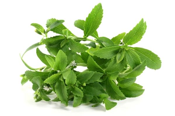 kuchen ohne stevia pflanze weiße blüten