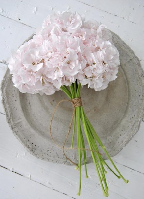 pelargonien eigenschaften garten pflanzen