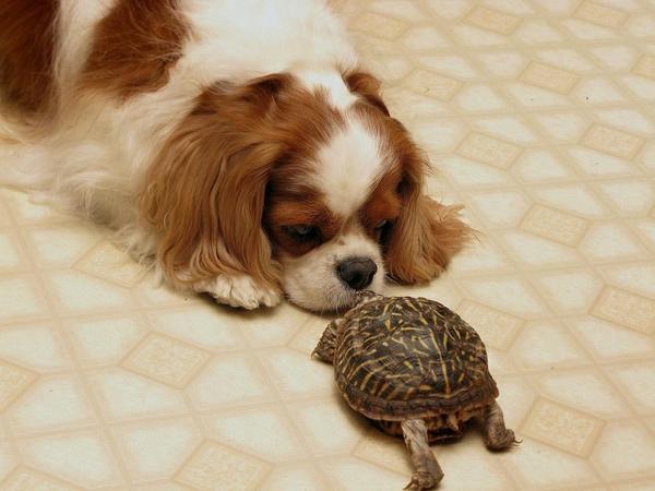 schildkröte als haustier hund freundschaft haustiere