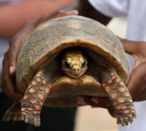 Schildkröte als Haustier? Warum denn nicht?