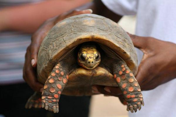 schildkröte als haustier information interessantes