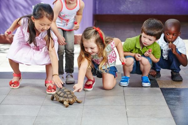 schildkröte als haustier kinder freude