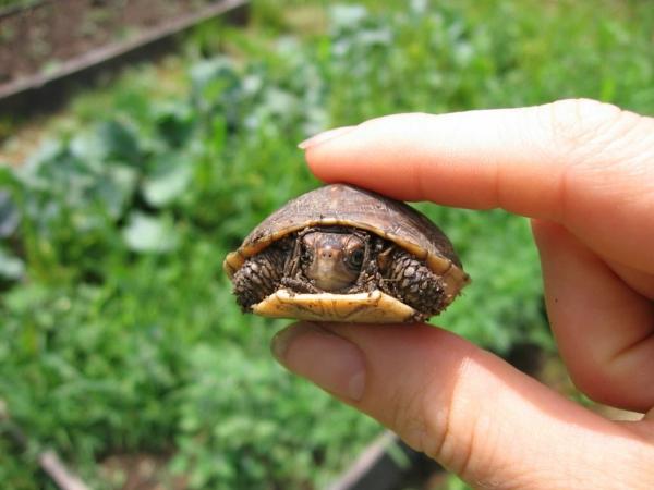 schildkröte als haustier lifestyle haustiere